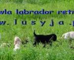 lusyja (1)
